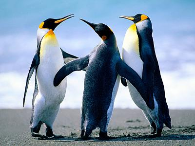 Click image for larger version  Name:penguins_by_kyuubidemon98.jpg Views:167 Size:161.7 KB ID:24853